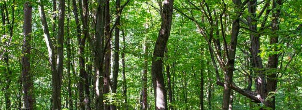 У Львові виявили 20 га лісу, які ексголова ЛОДА роздав під багатоповерхівки